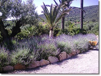 Novagarden plantas en mallorca mantenimiento de jardines for Bistro del jardin mallorca